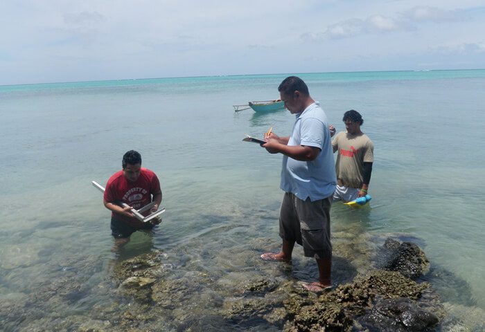 Measuring giant clams