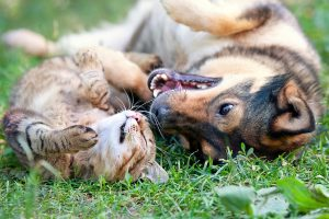 Dog and cat playing together outdoor.Lying on the back together