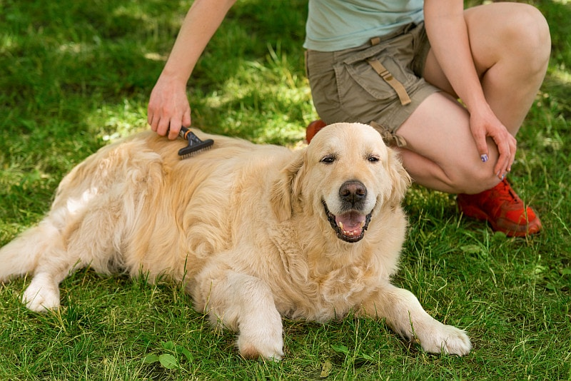 Women grooming dog outside in the grass