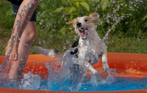 Dog playing in dog pool