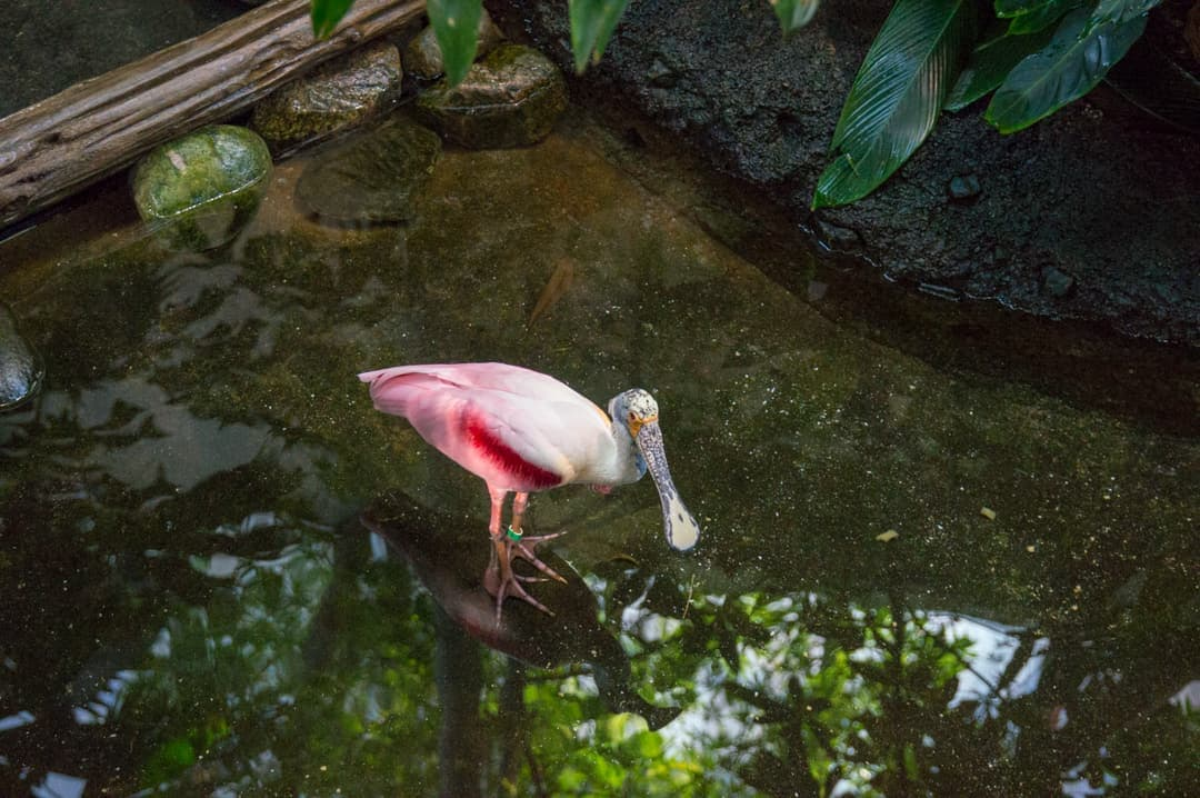 Colourful bird in the Biodome's Tropical Rainforest