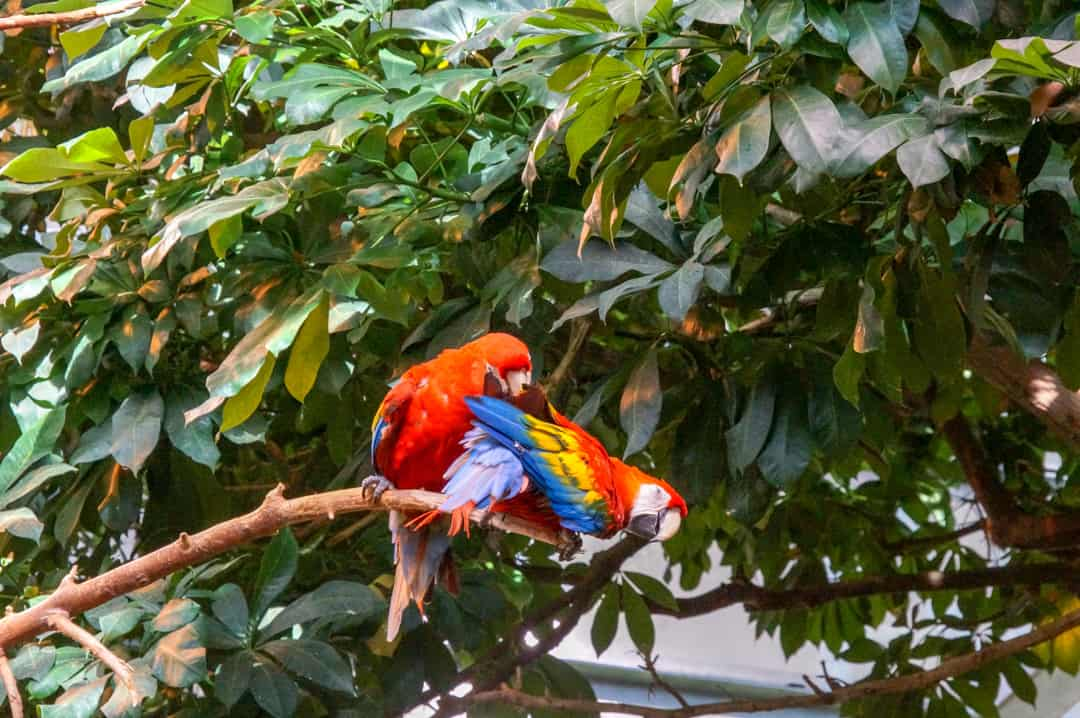 Colourful Parrots at Play in the Biodome's Tropical Rainforest