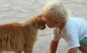 Parenting tips for kids who bully pets