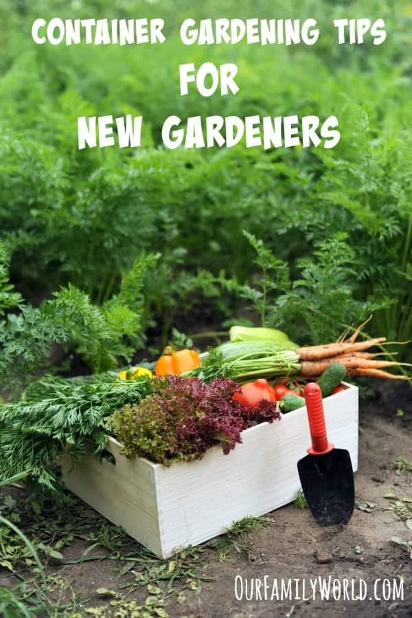 Container Gardening TIps For New Gardeners