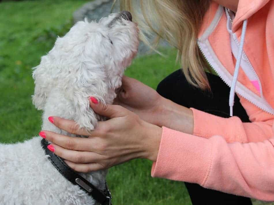 Can you really get paid for playing with dogs? Become a pet-sitter and you sure can! Find out how!