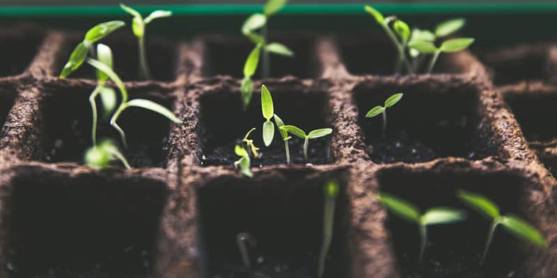 What Makes Seeds Sprout?