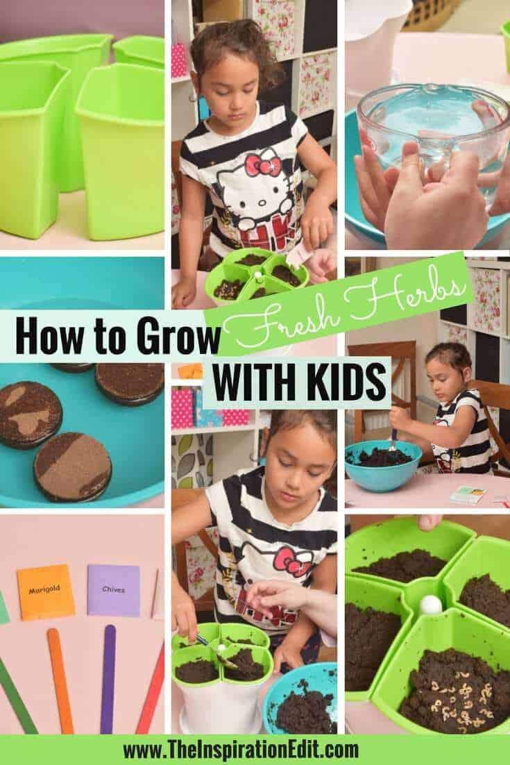 Easiest herbs to grow with kids