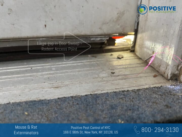 hole in the door that can be mice access point give a