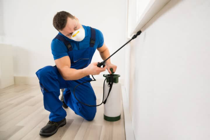 professional pest control worker