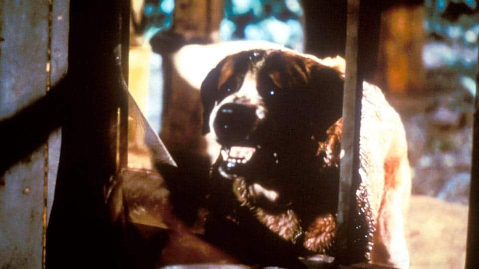 Cujo (1983) • Screenplay