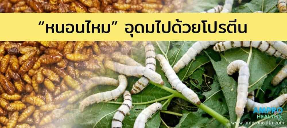 หนอนไหม ( Silkworm ) อุดมไปด้วยโปรตีน