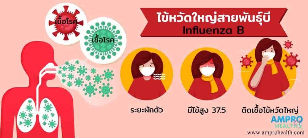 ไข้หวัดใหญ่ สายพันธุ์บี ( Influenza B ) คืออะไร
