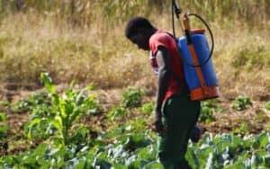 FSL Chongwe: Chemical Spraying
