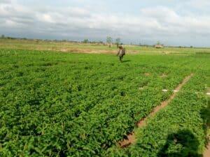 FSL Cotonou: urban farms