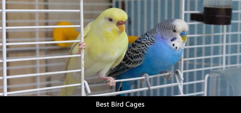 Best Bird Cage