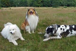 Cours collectif d'éducation canine à Bordeaux