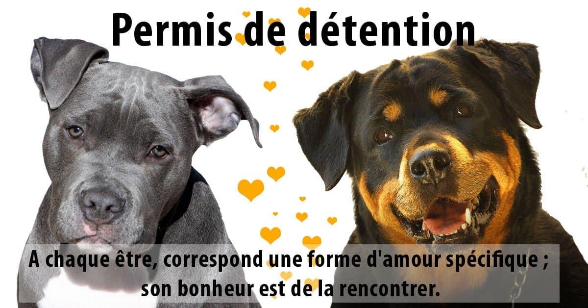permis de détention de chien catégorisé à bordeaux