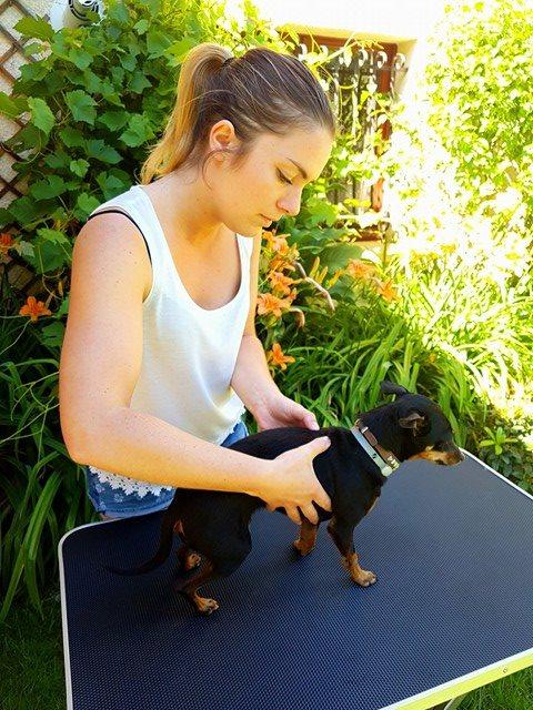 osteopathe chien bordeaux