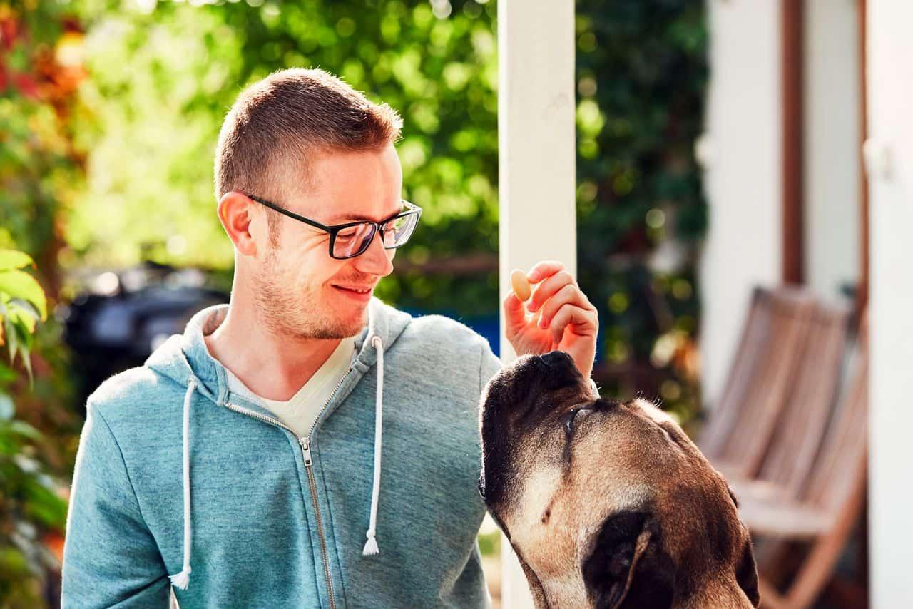 education du cane corso