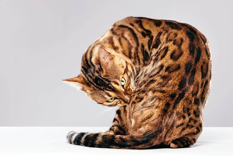 Un chat est généralement très propre