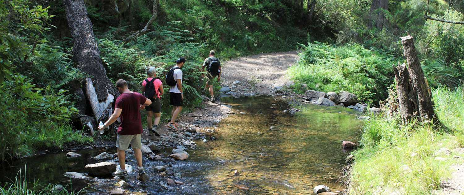 The Peak Potential Adventures team carefully crossing Alum Creek on the historic Six Foot Track trek through the stunning Blue Mountains
