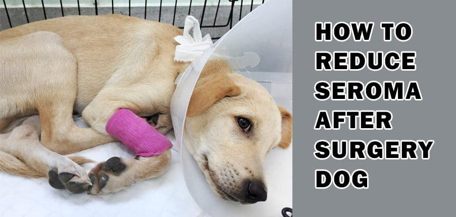 How to Reduce Seroma After Surgery Dog