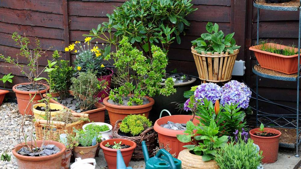 13 Gardening Experts on Gardening Tips For Beginner (plus tips from Reddit users)