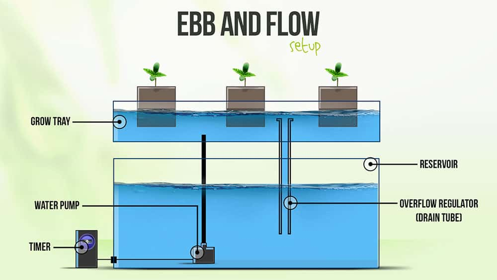 Ebb and Flow Hydroponics System Setup Guide