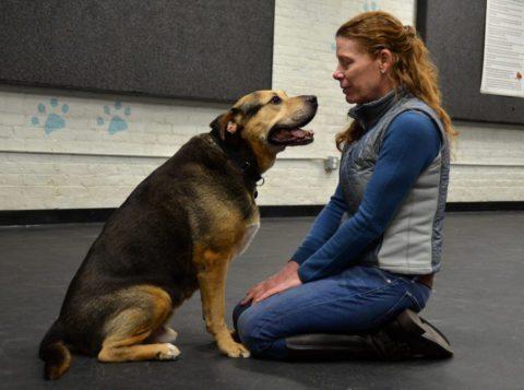 professional-dog-trainer