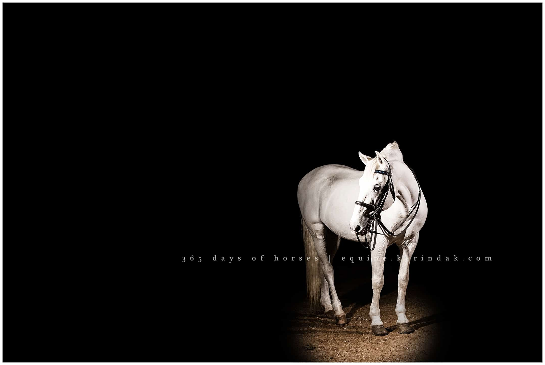Houston Horse Photographer Archives Page 8 Of 29 Texas Equine Photography Karinda K Equine Photography