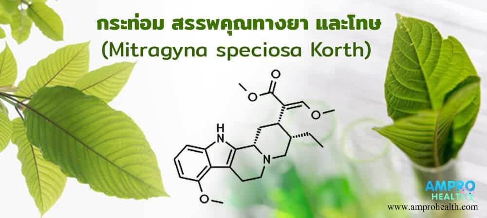 พืชกระท่อม สรรพคุณทางยา