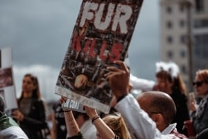 Animal Rights Activists Protested A Local Vivero Last Friday