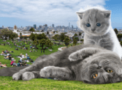 """First """"Caturday"""" Party in San Francisco (Dolores Park)"""