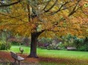 San Francisco Botanical Garden's Free Day (2nd Tuesdays)