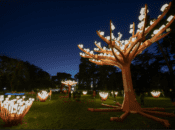 SF's Lighted Forest Returns to Golden Gate Park on Dec. 2