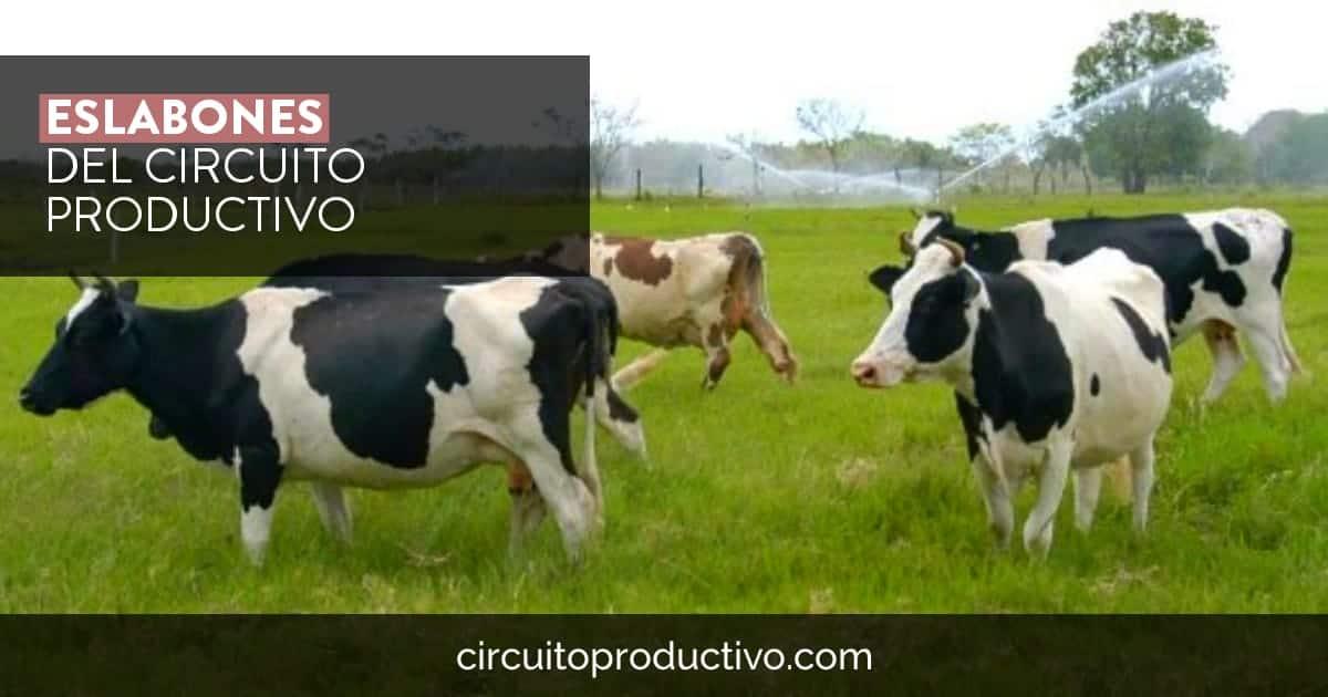Eslabones del circuito productivo de la leche