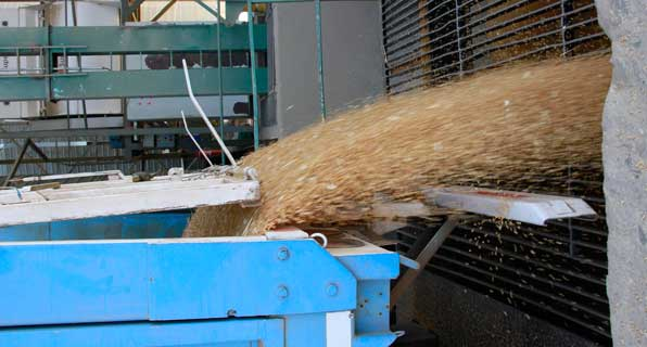 Molienda de trigo