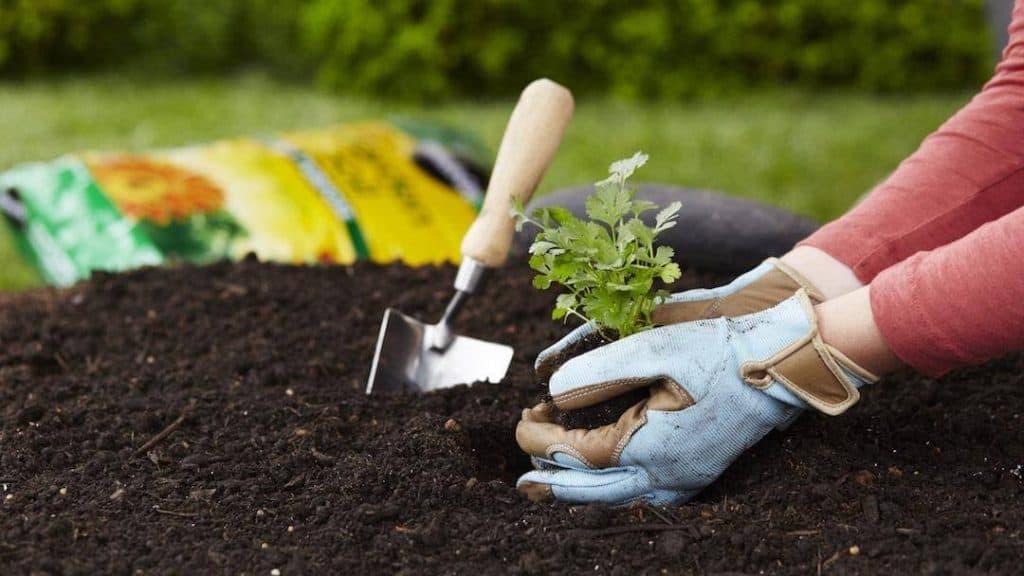 13 Gardening Experts on Gardening Tips For Beginner (plus tips from Reddit users)