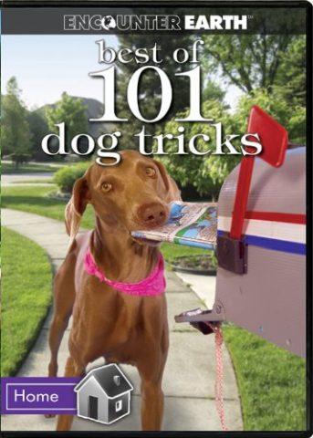best-of-101-dog-tricks