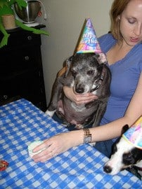 dogs-at-birthday-party-by-outlan2000.jpg