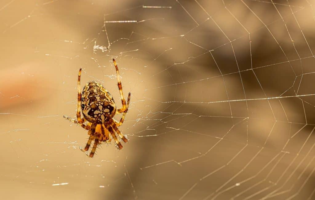 dream spider attack