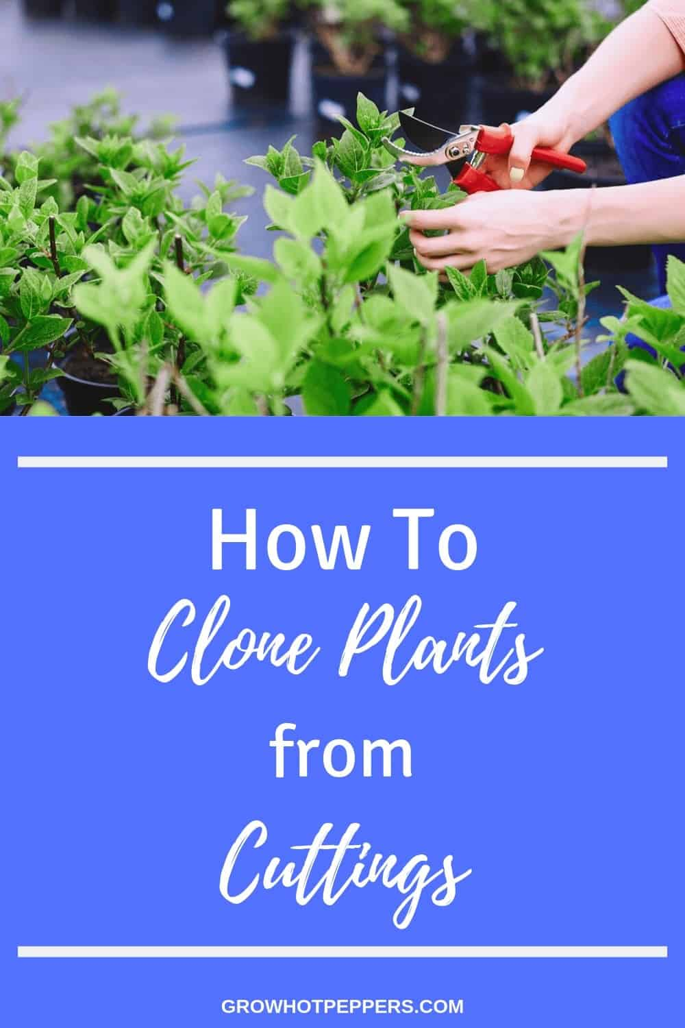How to Clone Plants from Cuttings