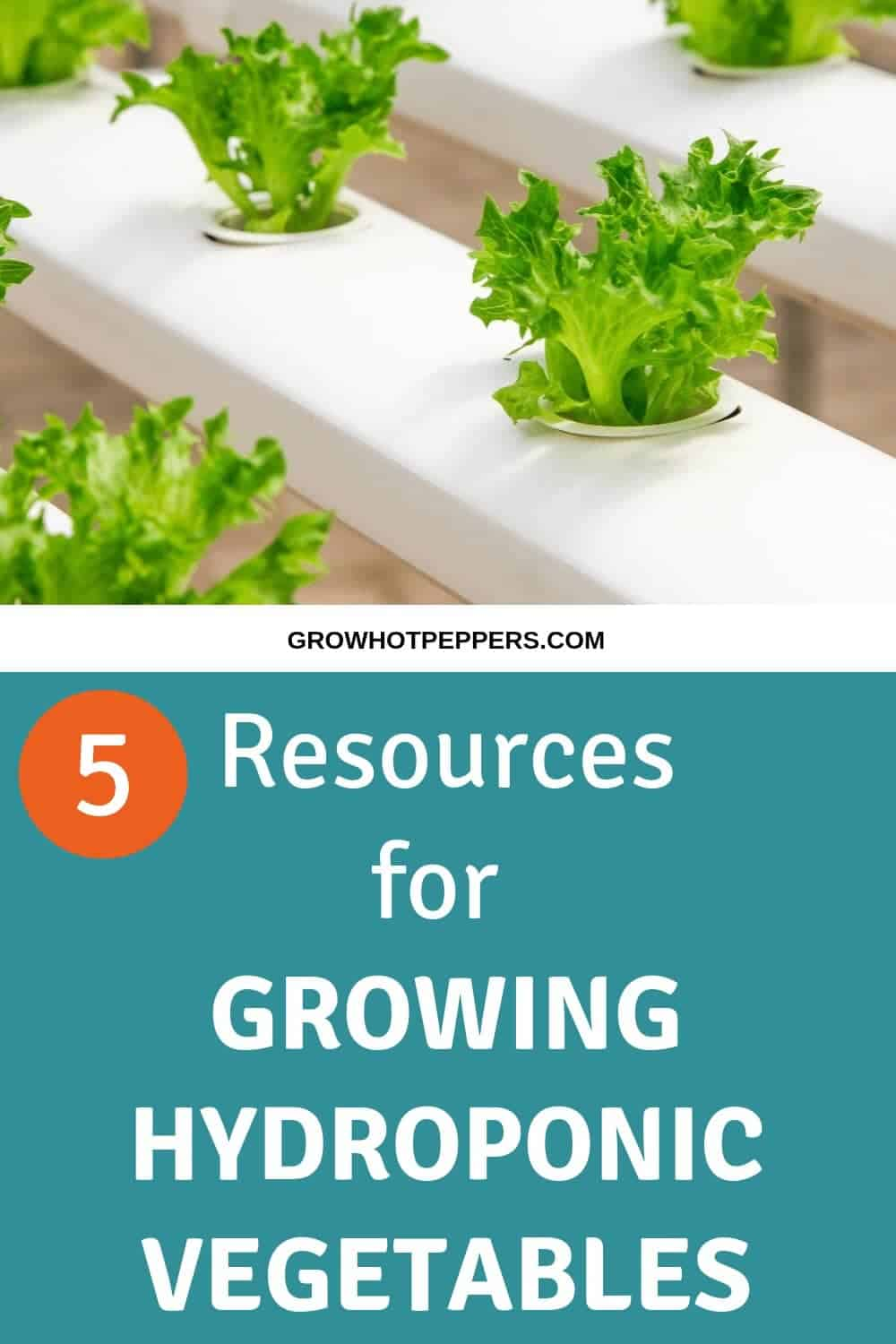 Hydroponic Gardening: 5 Resources That Will Help You Grow Without Soil