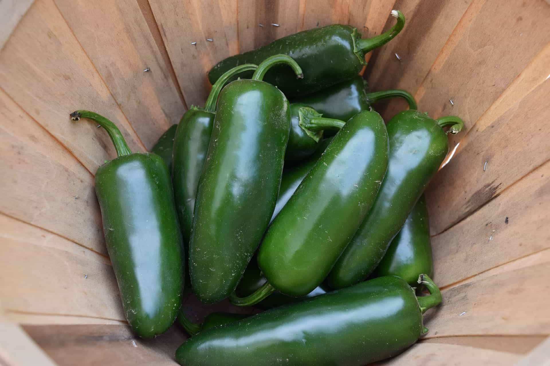 jalapeno peppers in container