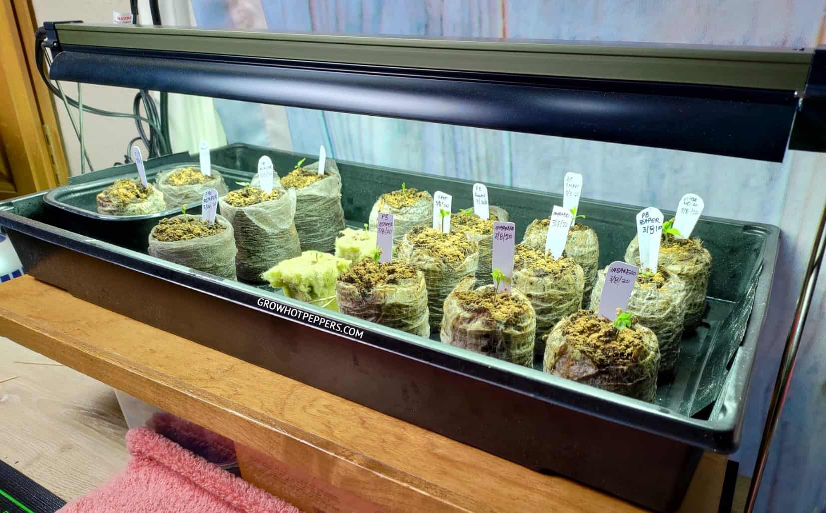 T5 indoor grow light starting pepper seeds