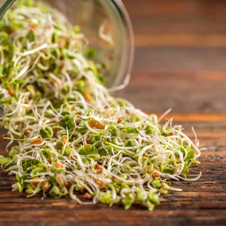 radish sprouts in a jar