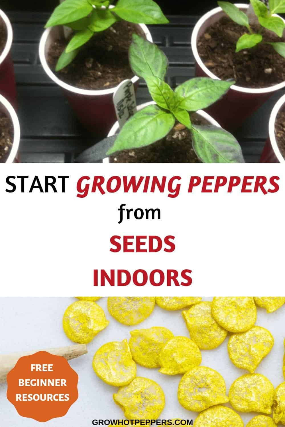 start growing peppers pinterest graphic