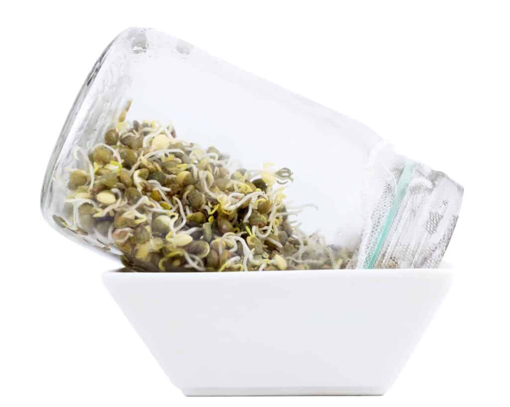 seed sprouting jar draining in a bowl