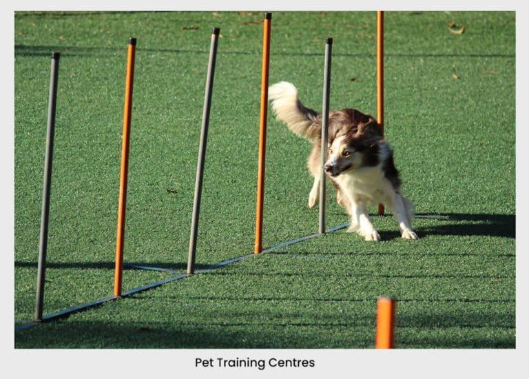 pet training center dog training dog running dog playing pet playing  | pet business idea  31+ Profitable & Unique Pet Business Ideas For 2021