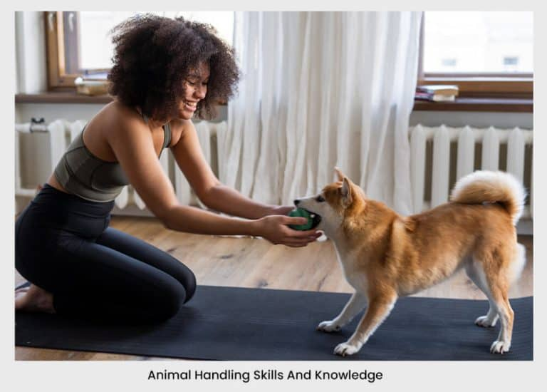 Your Animal Handling Skills And Knowledge dog girl ball | pet business idea 31+ Profitable & Unique Pet Business Ideas For 2021